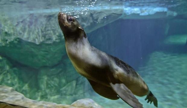 океанариуем воронеж полярные воды