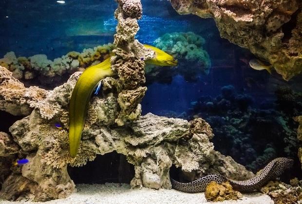 воронежский океанариум