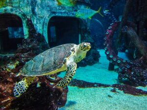 океанариум воронеж моря и океаны
