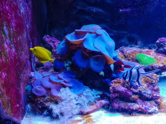 океанариум воронеж моря и океаны 2